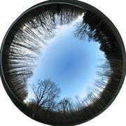 360x200 degrees Fisheye Image - trees (Allsky / Fulldome / texture) Stock Photos