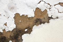 mould on plaster and peeling paint indicating rising damp - stock photo