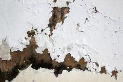 fungus and flaking paint due to rising damp - stock photo