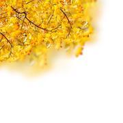 Fall leaves Piirros