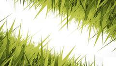 Grass concept card rendered Stock Illustration