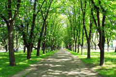 Beautiful park with many green trees Stock Photos