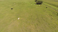 Aerial farm and cows Stock Footage