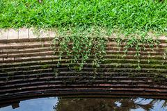 grass and moss grow on old brick wall - stock photo