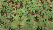 Stock Video Footage of The seedlings in the greenhouse tomato cucumber pepper 7