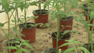 Stock Video Footage of The seedlings in the greenhouse tomato cucumber pepper 1