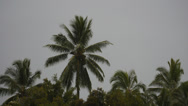 Stock Video Footage of coconut palm tree timelapse.
