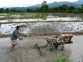 Stock Photo of Farmer with motorized plow in flooded rice paddy