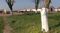 Cow farm free system - stock footage