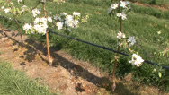 Stock Video Footage of Apple orchard in bloom modern 9