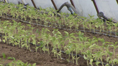 Drip irrigation in greenhouse nursery - stock footage