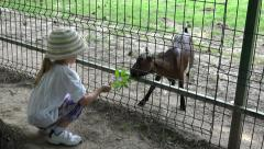4K Little Girl Feeding Baby Goat, Happy Child, Kid at Zoo Park, Children Stock Footage