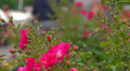 People strolling among flowers in park. Selective focus. Footage