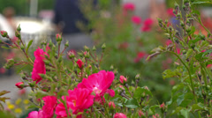 People strolling among flowers in park. Selective focus. Stock Footage