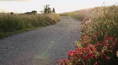 Tuscany sunset landscape Stock Footage