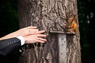 Hands of groom and bride with squirrel Stock Photos