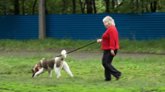 The woman shirks a big dog. Stock Footage