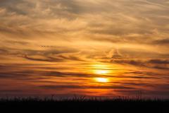 flying birds on dramatic sunset background - stock photo