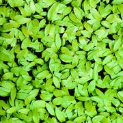 closeup of small green leaves background - stock photo