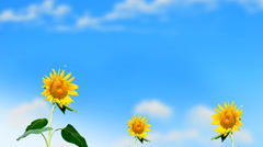 Sunflowers Waving in Breeze Stock Footage