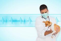 Composite image of vet in protective mask checking chihuahua Stock Photos