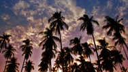 Palms back lit sky with clouds , sunset in paradise Stock Footage