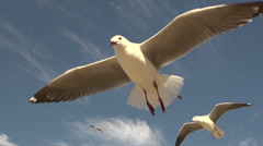 Seagulls fly in slow motion Stock Footage