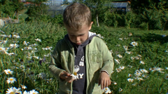 A boy breaks the petals of a white camomile flower 04 Stock Footage