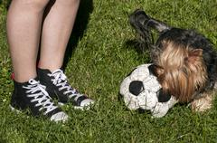 Girl legs and playing terrier - stock photo