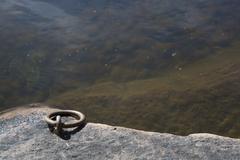 Mooring link by lake Stock Photos