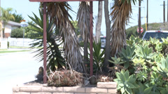 hermosa beach sign with plants - stock footage