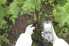 Measuring radiation levels of carrot Stock Photos
