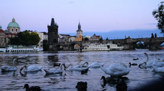 swans on the vltava river in prague at dusk, czech republic, locked down - stock footage
