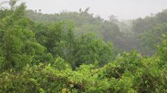 Tropical storm heavy rain wind monsoon tree trees wood woods forest jungle  Stock Footage