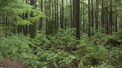 Lush Growth, Coastal Rainforest Stock Footage
