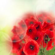 field of poppy flowers - stock illustration