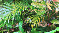 Jungle forest, tropical rain, rainy day background Stock Footage