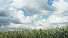 Field with blue sky and clouds move - Time Lapse 1080p - stock footage