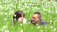 Stock Video Footage of Couple of lover lie down in blossom daffodils meadow, dreaming together 4K