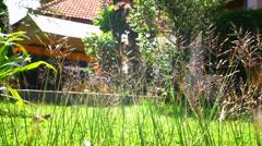 Flower grass under sunshine near house. Video shift Stock Footage