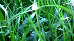 Grass under sunshine. Shift macro video Stock Footage