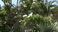 Stock Video Footage of White flowers at the Dead sea