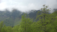 Splendid spring view, fog rising up mountains, green trees, time lapse Stock Footage