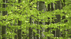 Fresh green forest, focus out, splendid view Stock Footage