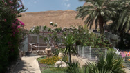 Stock Video Footage of Plants growing in resting-places  at the Dead sea
