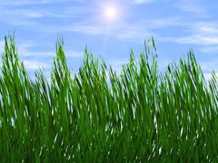 bright green grass on a blue sky sunbeam backgrounds - stock illustration