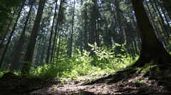 Stock Video Footage of Looking up to she sky in forest with height trees, sun shining