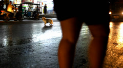 Cars drive and the dog runs unhinged on a wet road after rain. Video Stock Footage