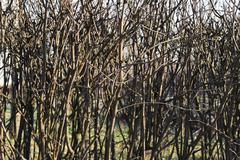 Early spring garden. naked bush. nature season specific Stock Photos