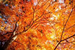 Stock Photo of fall season with nice color